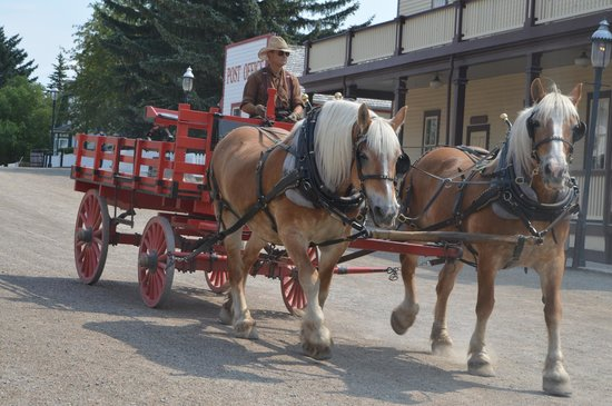 Heritage Park Historical Village: horses