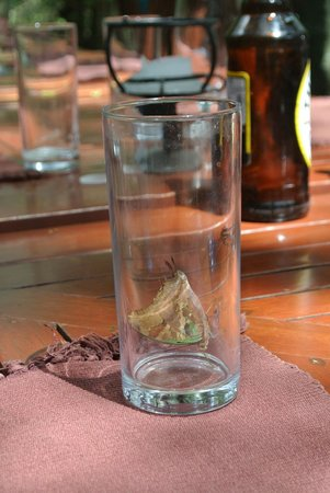 Mara Intrepids Luxury Tented Camp : Butterflies finish off your drinks.