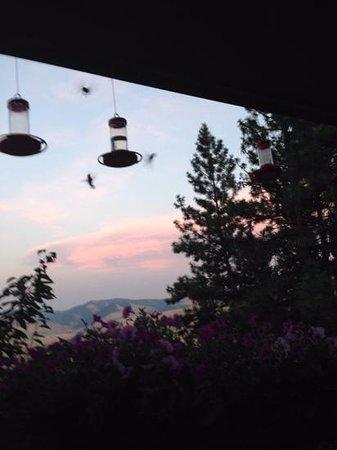 Blue Mountain Bed & Breakfast: the hummingbirds