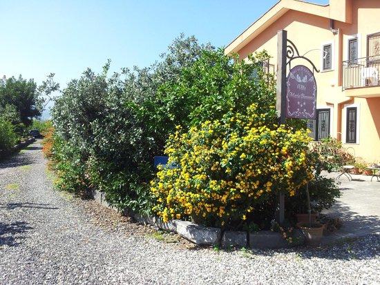 B&B Villa Maria Giovanna : Вид из сада №2