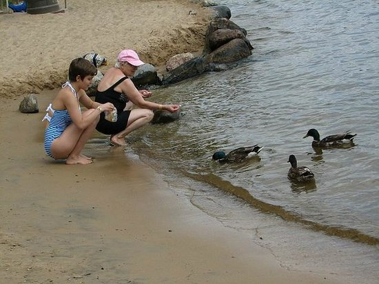 Feeding ducks on the beach, Wilderness on the Lake