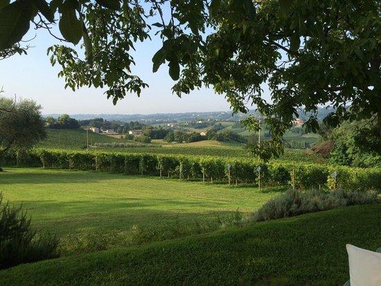 Alice Relais nelle Vigne: Le vigne