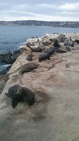 La Jolla Kayak: Seals