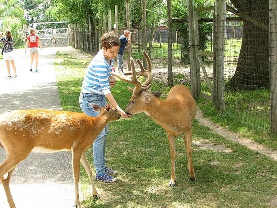 Wisconsin Deer Park: You can feed and pet the deer just like that!