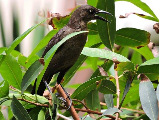 Villa La Estancia : Bird in the gardens