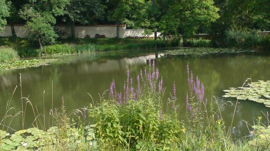 Manoir de Montflambert : Fishing pond