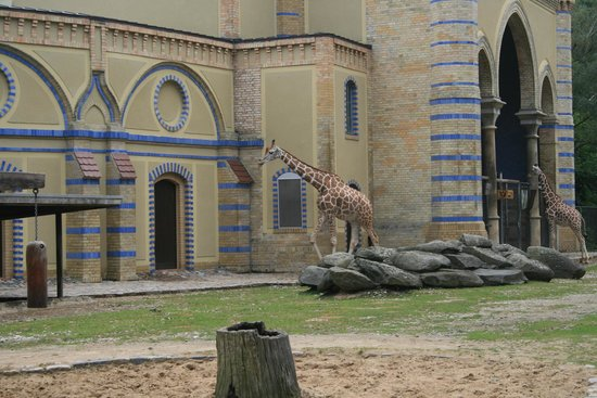 Berlin Zoological Garden : Richiami all'architettura africana per le giraffe