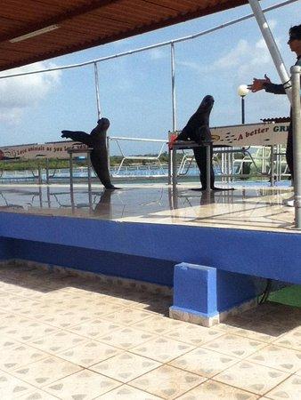 Dolphinarium, Cayo Naranjo: sea lions