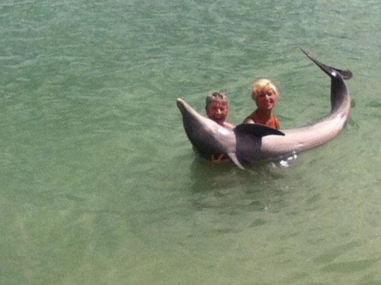 Dolphinarium, Cayo Naranjo: brilliant day