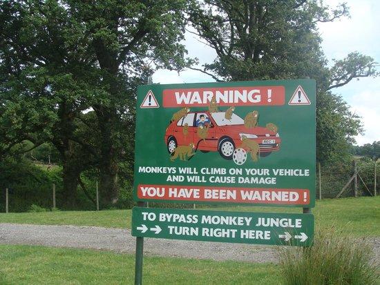 Longleat: Attention aux singes