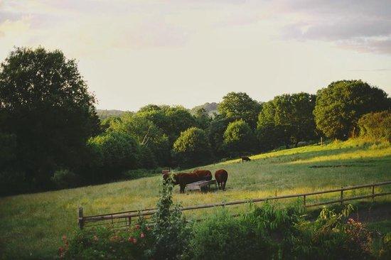 Stone Hill Farm B&B