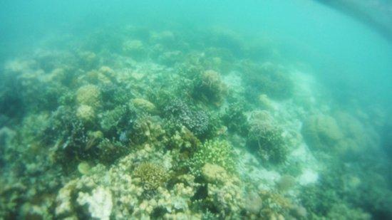 Coral Garden : coral6