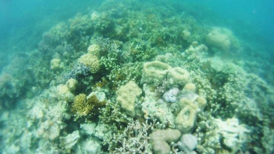 Coral Garden : coral5