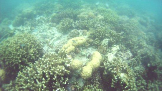 Coral Garden : coral4