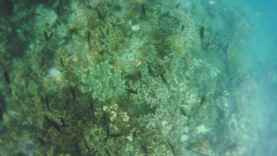 Coral Garden: coral2