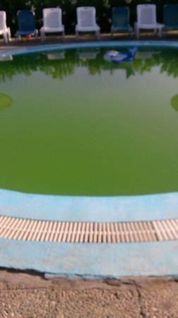 Cyprotel Corfu Panorama: Children's pool (would you put your child in there!!!!)