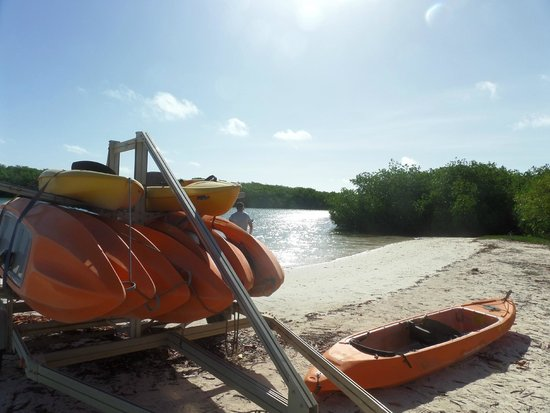 Glass Bottom Boat and Kayak Snorkel Tours: De kano's