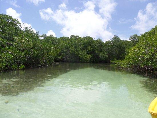 Glass Bottom Boat and Kayak Snorkel Tours: waar je gaat snorkelen