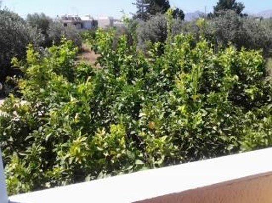 Argiro Village: ulivi e limoni dal nostro balcone