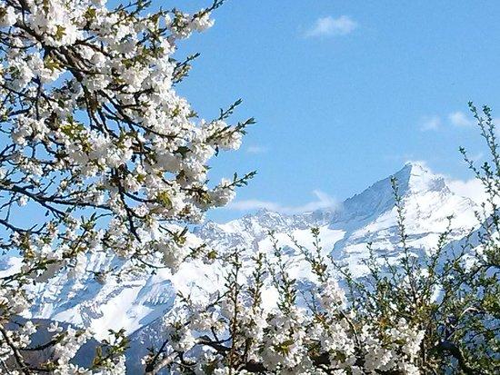 Le Vieux Noyer: la primavera