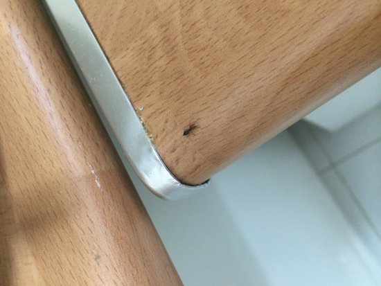 Pinhal da Marina: Ants all over the kitchen and they refused to believe it was there until we showed photographic