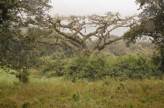 Mount Azimbo Lodge : On the farm