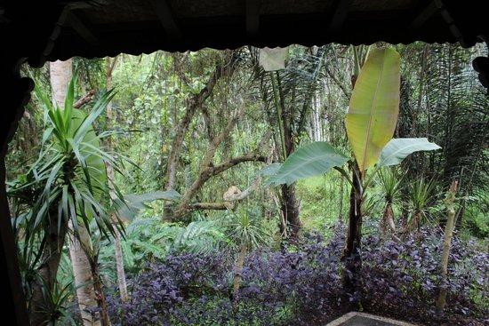 DD Ubud Villa: Nature just front of your door