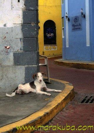 Casco Viejo: Dog on street