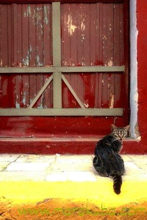 Casco Viejo: Cat front of door