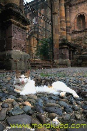 Casco Viejo: Cat