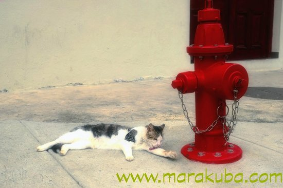 Casco Viejo: Cat on the street