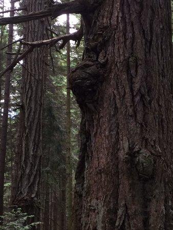 حديقة شاطئ راثترفور الإقليمية: Evil tree.