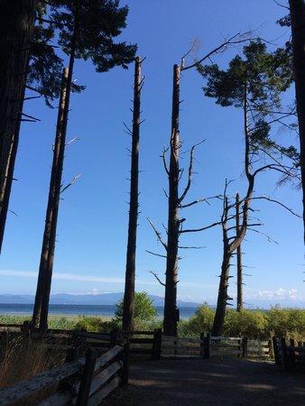 حديقة شاطئ راثترفور الإقليمية: Trail leading to the rocky beach.