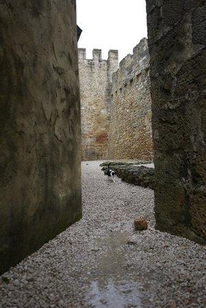 Castillo de San Jorge: Котик