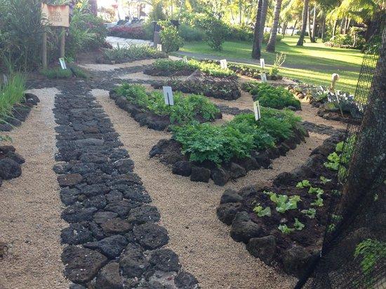 LUX* Le Morne: herb garden