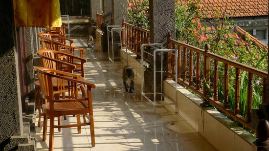 Ubud Permai Bungalow & Spa : Monkeys in the balcony