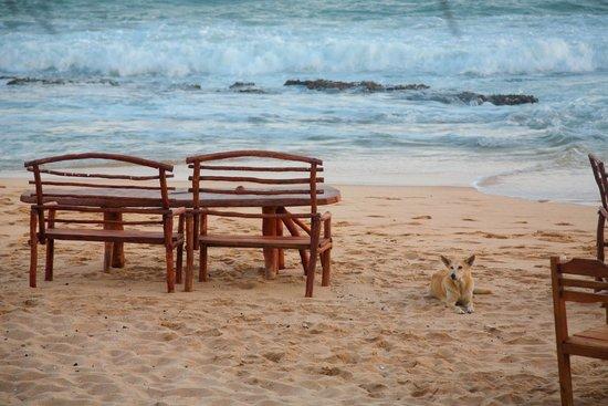 Sandy Cabanas : Можно сесть и на территории пляжа только часов да 21.00 очень ветренно