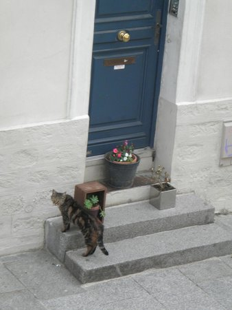 L'Hotel Particulier : The cat :)