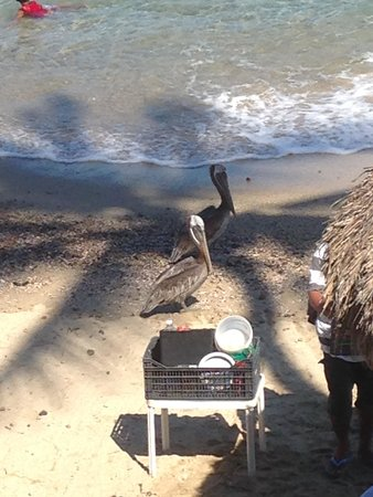 Lindo Mar Resort: The pelicans are fun to watch