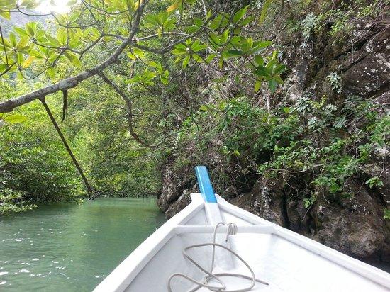 Kilim Karst Geoforest Park: Mangrove tour !! Superbe