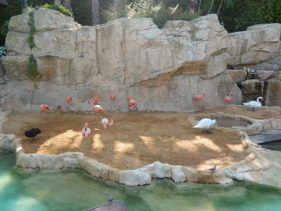 Mundomar : Flamingos
