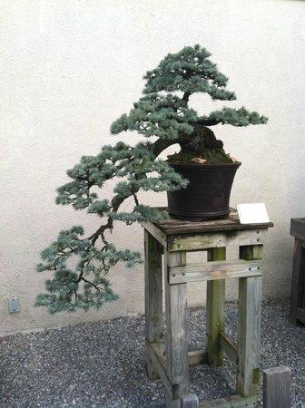U.S. National Arboretum: Bonsai Garden