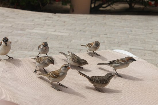 ClubHotel Riu Funana: Friendly sparrows- they like bread