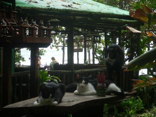 "Banpu Koh Chang Resort: кошачий ""пахан"" и его дымы"