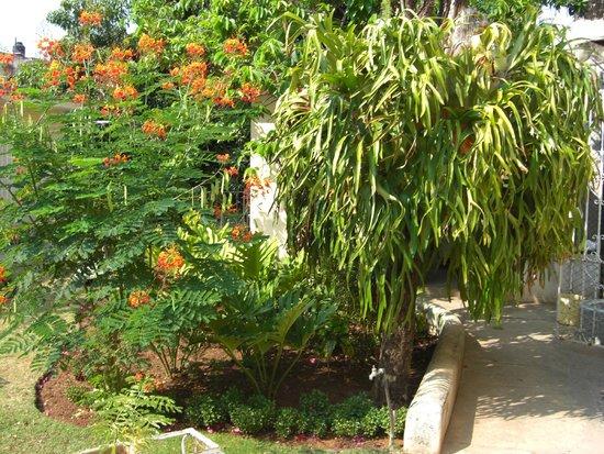 Casa Park: Jardin posterior
