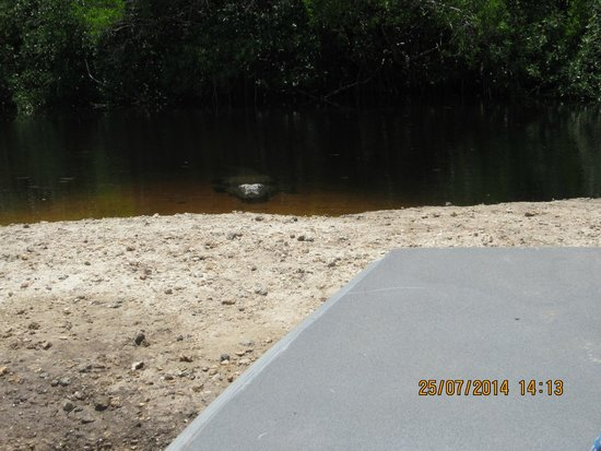 Jungle Erv's Everglades Airboat Tours : Be careful or I'm gonna getcha!