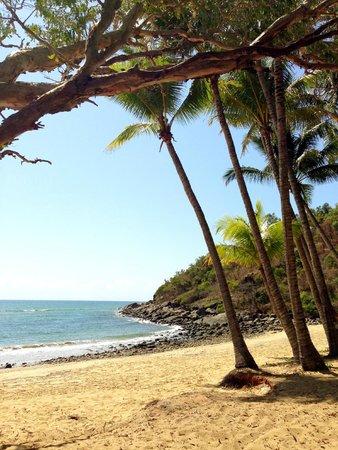 Turtle Cove Beach Resort : Beach