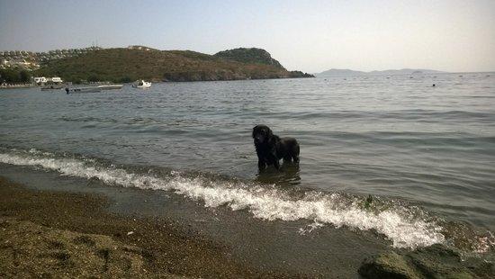 Otel Gumusluk: Beach Dog
