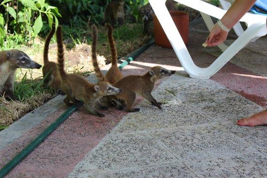 Grand Bahia Principe Coba: naughty , feeding the wildlife