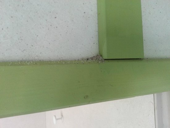 Camping Sandaya les Tamaris: Des nids de fourmis partout.